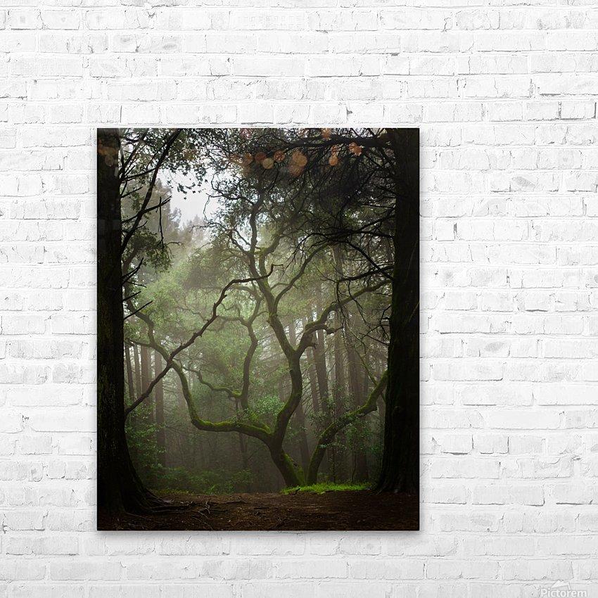 Clearing in the Woods HD sublimation métal imprimé avec décoration flotteur cadre (boîte)
