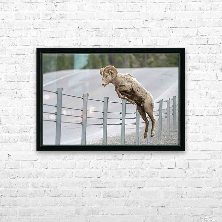 7585 - Bighorn Sheep HD Sublimation Metal print with Decorating Float Frame (BOX)