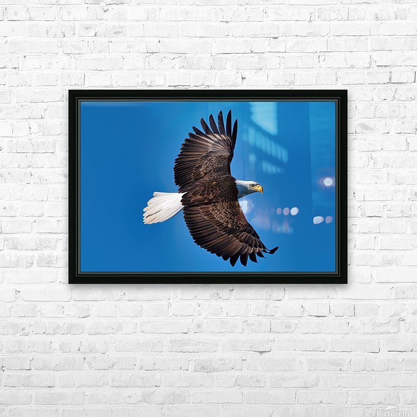 American Bald Eagle HD Sublimation Metal print with Decorating Float Frame (BOX)