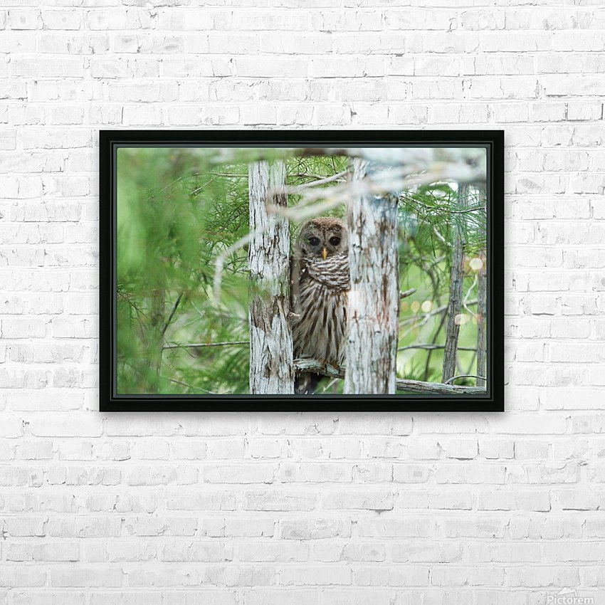 Barred Owl HD Sublimation Metal print with Decorating Float Frame (BOX)