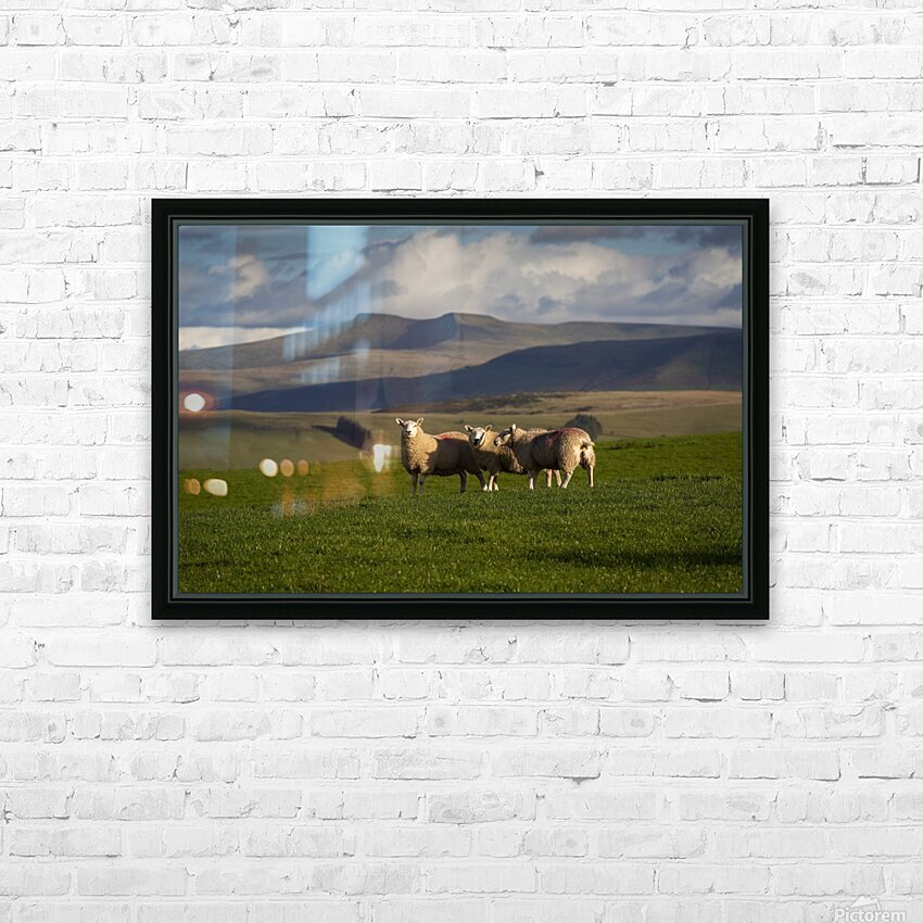 Sheep on the Brecon Beacons HD Sublimation Metal print with Decorating Float Frame (BOX)
