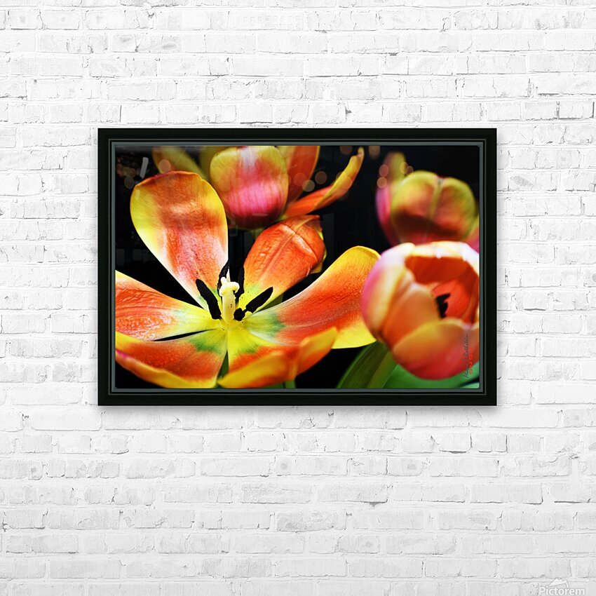 Tulip 1 HD Sublimation Metal print with Decorating Float Frame (BOX)