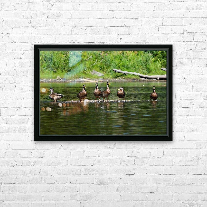 What the duck HD sublimation métal imprimé avec décoration flotteur cadre (boîte)