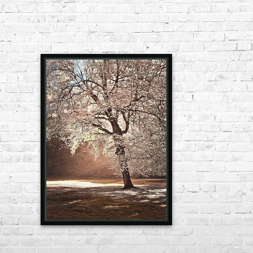 Autumn tree in sunlight HD Sublimation Metal print with Decorating Float Frame (BOX)
