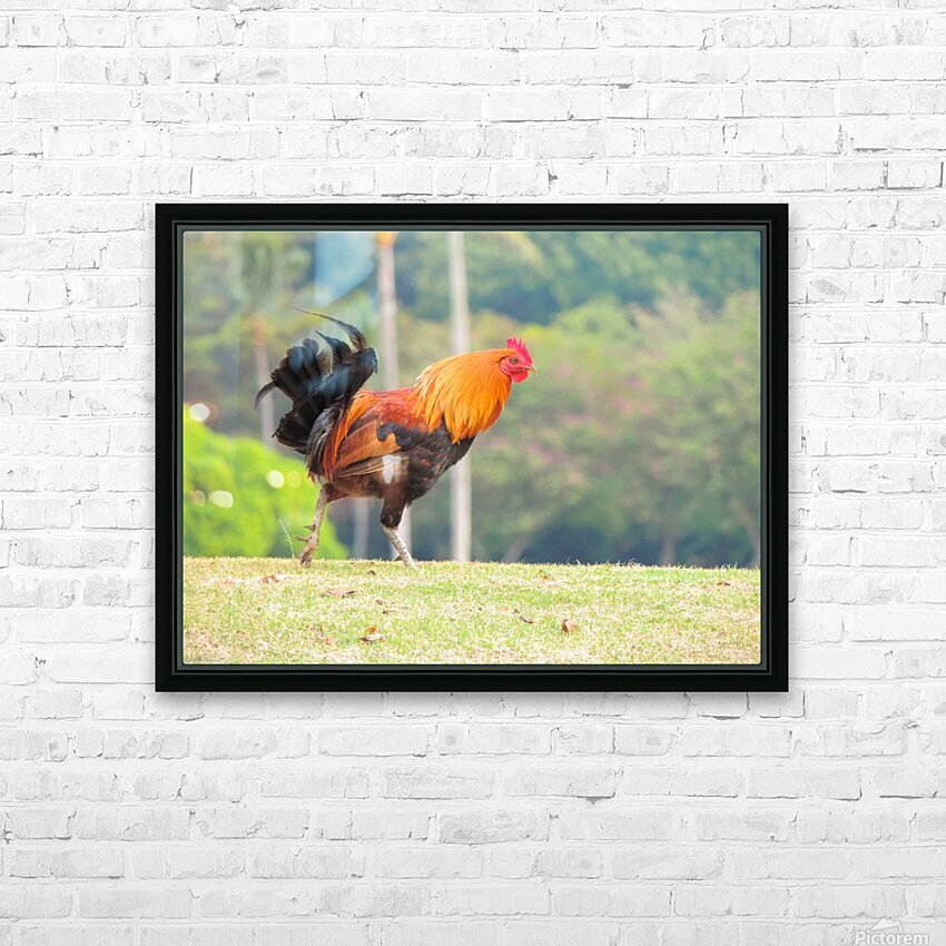 Red Rooster HD Sublimation Metal print with Decorating Float Frame (BOX)