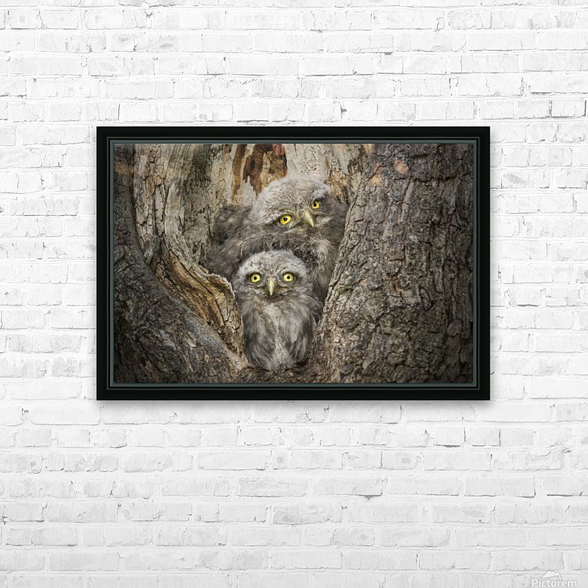 Civ and Civ by Alberto Ghizzi Panizza HD Sublimation Metal print with Decorating Float Frame (BOX)