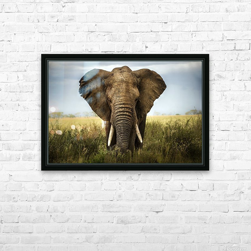 Encounters in Serengeti HD Sublimation Metal print with Decorating Float Frame (BOX)