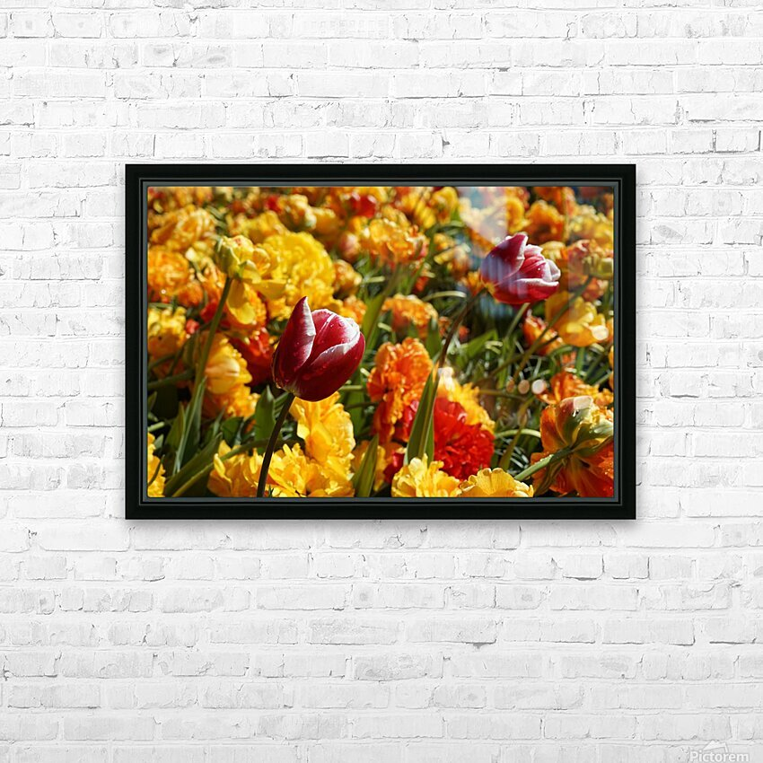 Spring Blooms of Holland 7 of 8 HD Sublimation Metal print with Decorating Float Frame (BOX)