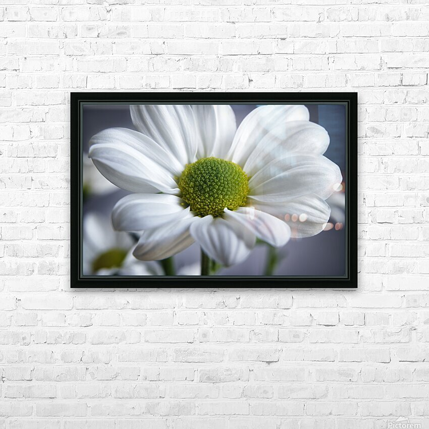 White Daisy HD Sublimation Metal print with Decorating Float Frame (BOX)