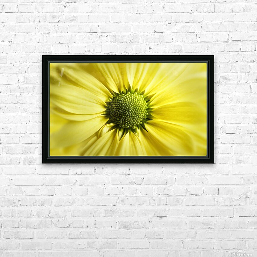 Yellow Daisy HD Sublimation Metal print with Decorating Float Frame (BOX)