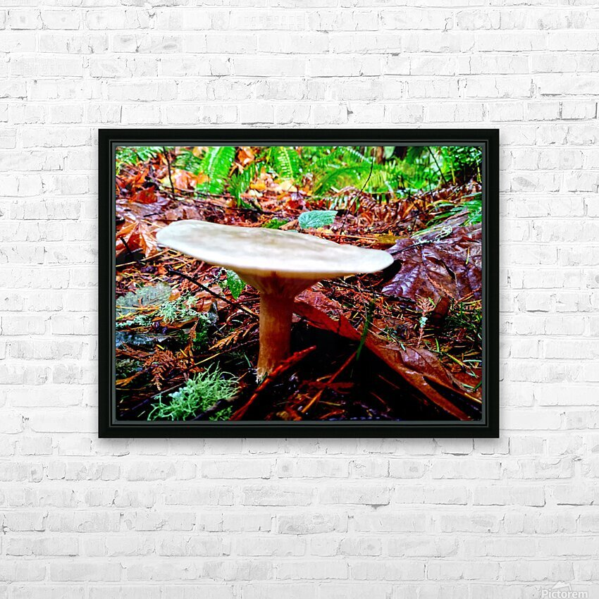 Tiny World 4 of 8 - Mushrooms and Fungi HD Sublimation Metal print with Decorating Float Frame (BOX)