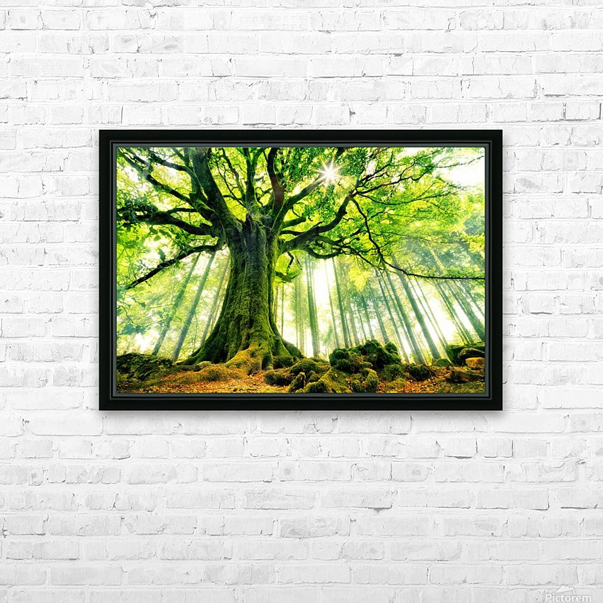 Ponthus Beech by Christophe Kiciak  HD Sublimation Metal print with Decorating Float Frame (BOX)