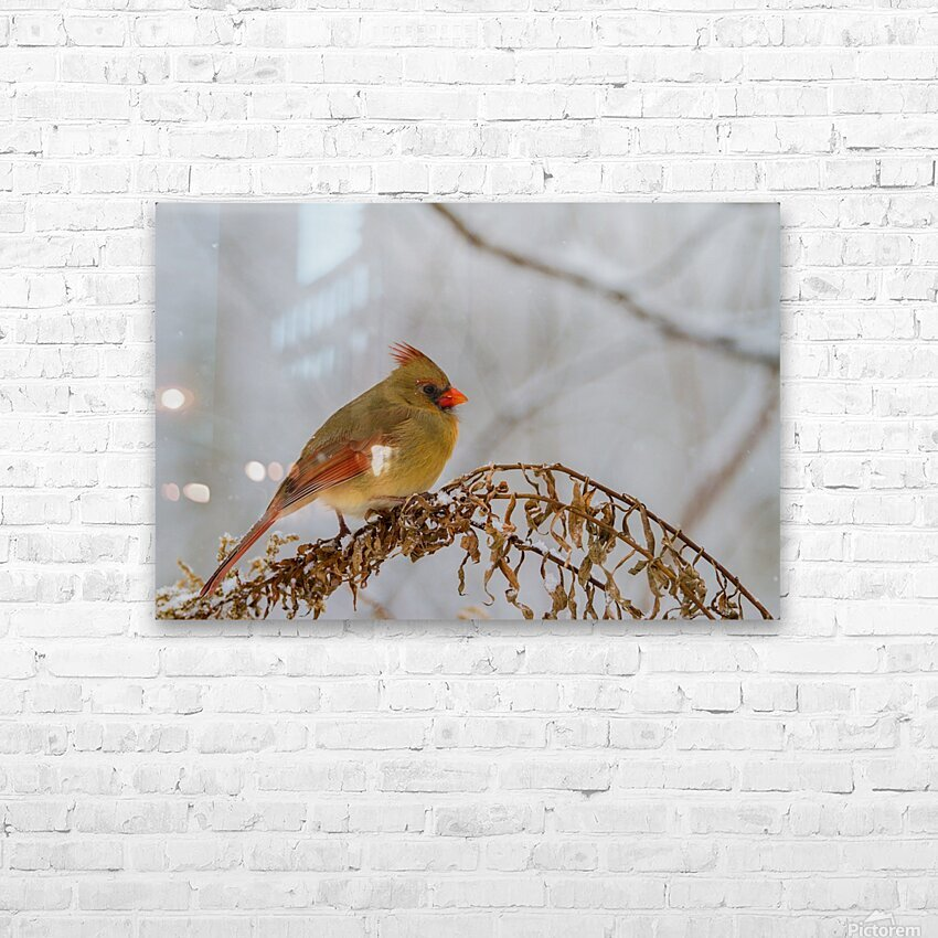 Cardinal ap 1726 HD Sublimation Metal print with Decorating Float Frame (BOX)