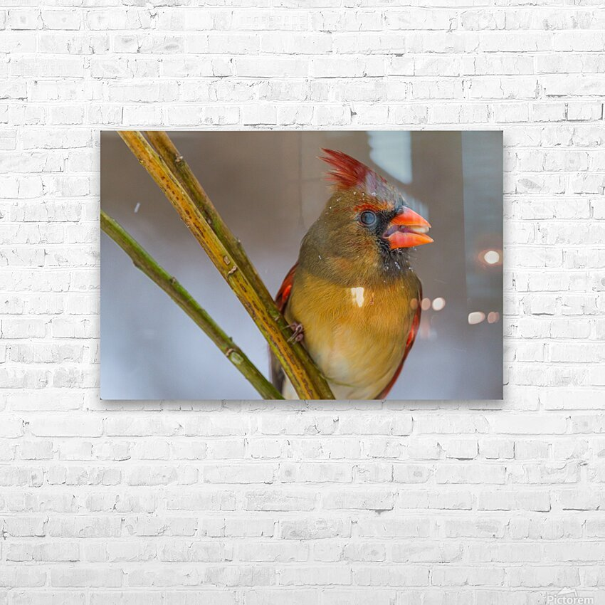 Cardinal ap 1822 HD Sublimation Metal print with Decorating Float Frame (BOX)