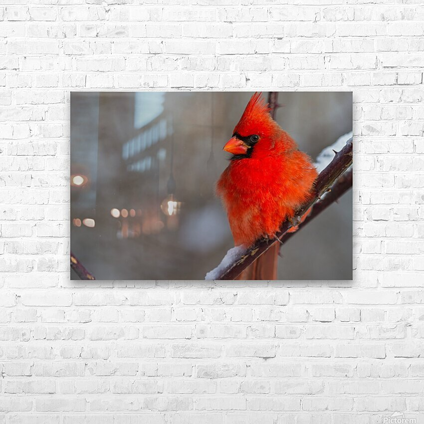 Cardinal ap 1866 HD Sublimation Metal print with Decorating Float Frame (BOX)