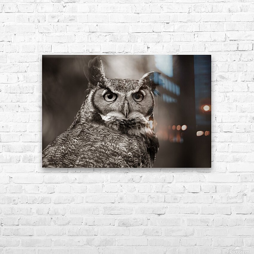 Great Horned Owl ap 2860 B&W HD Sublimation Metal print with Decorating Float Frame (BOX)