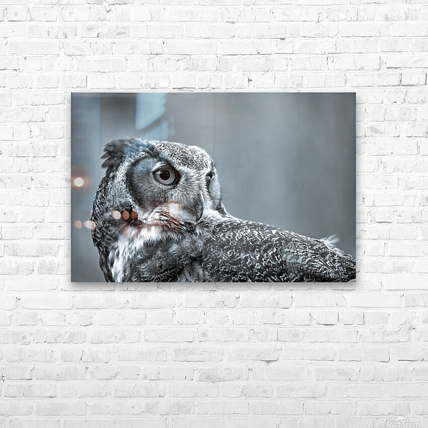 Great Horned Owl ap 2861 B&W HD Sublimation Metal print with Decorating Float Frame (BOX)