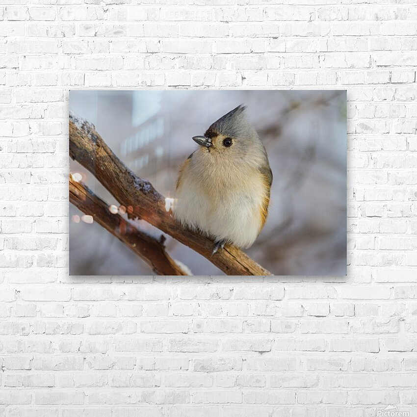 Titmouse ap 1868 HD Sublimation Metal print with Decorating Float Frame (BOX)
