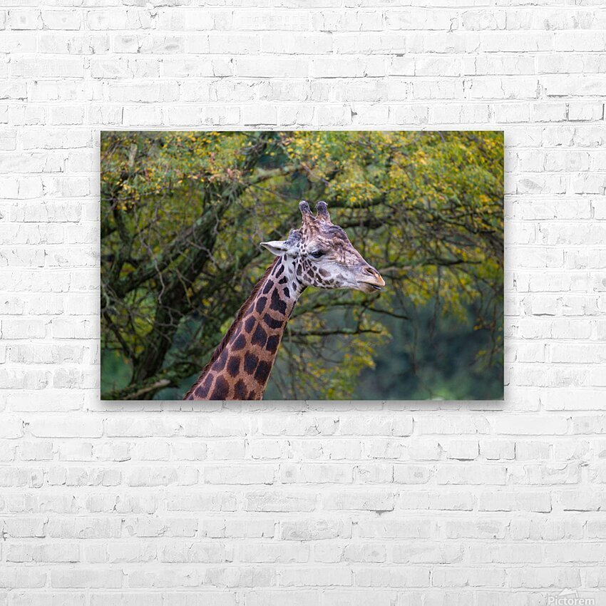 Portrait ap 2906 HD Sublimation Metal print with Decorating Float Frame (BOX)