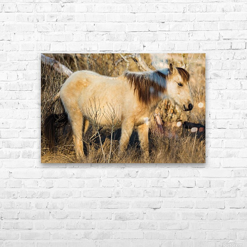 Wild Horse ap 2740 HD Sublimation Metal print with Decorating Float Frame (BOX)