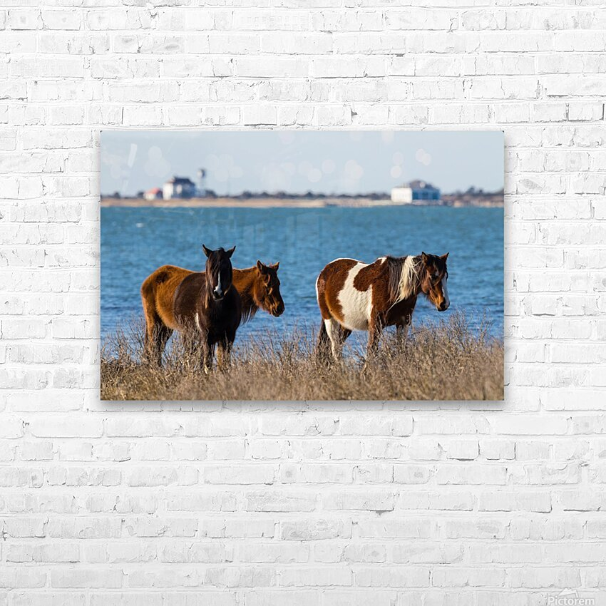 Wild Horses ap 2796 HD Sublimation Metal print with Decorating Float Frame (BOX)