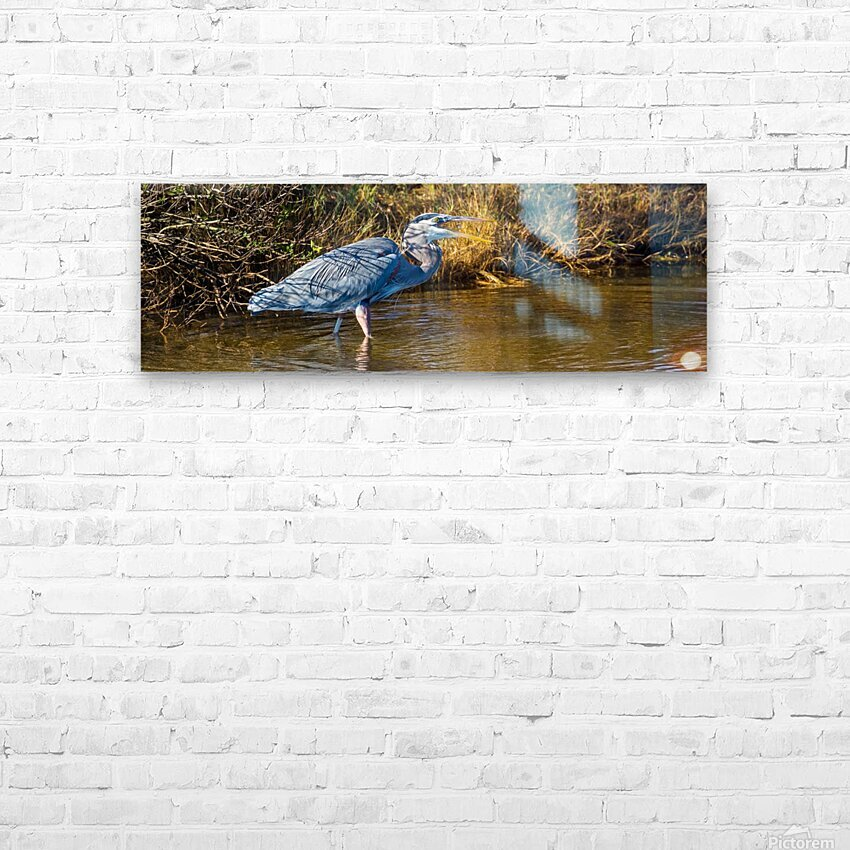 Great Blue Heron ap 2133 HD Sublimation Metal print with Decorating Float Frame (BOX)