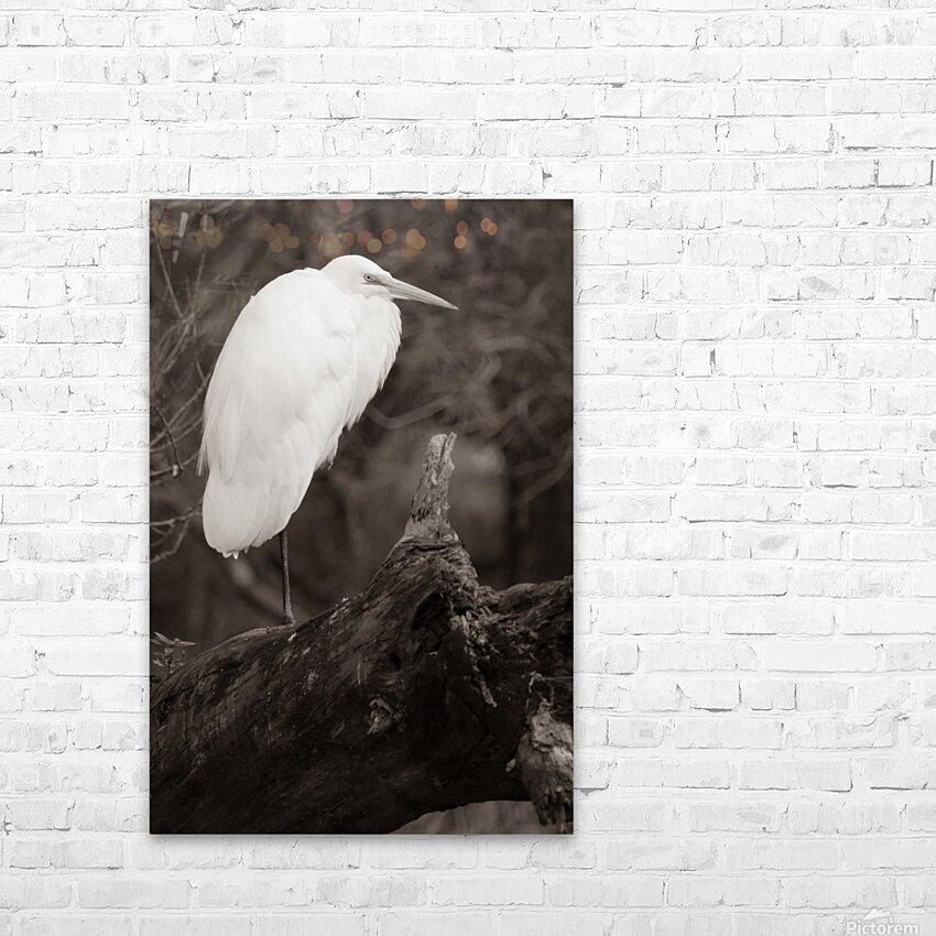 Great White Egret ap 1848 B&W HD sublimation métal imprimé avec décoration flotteur cadre (boîte)