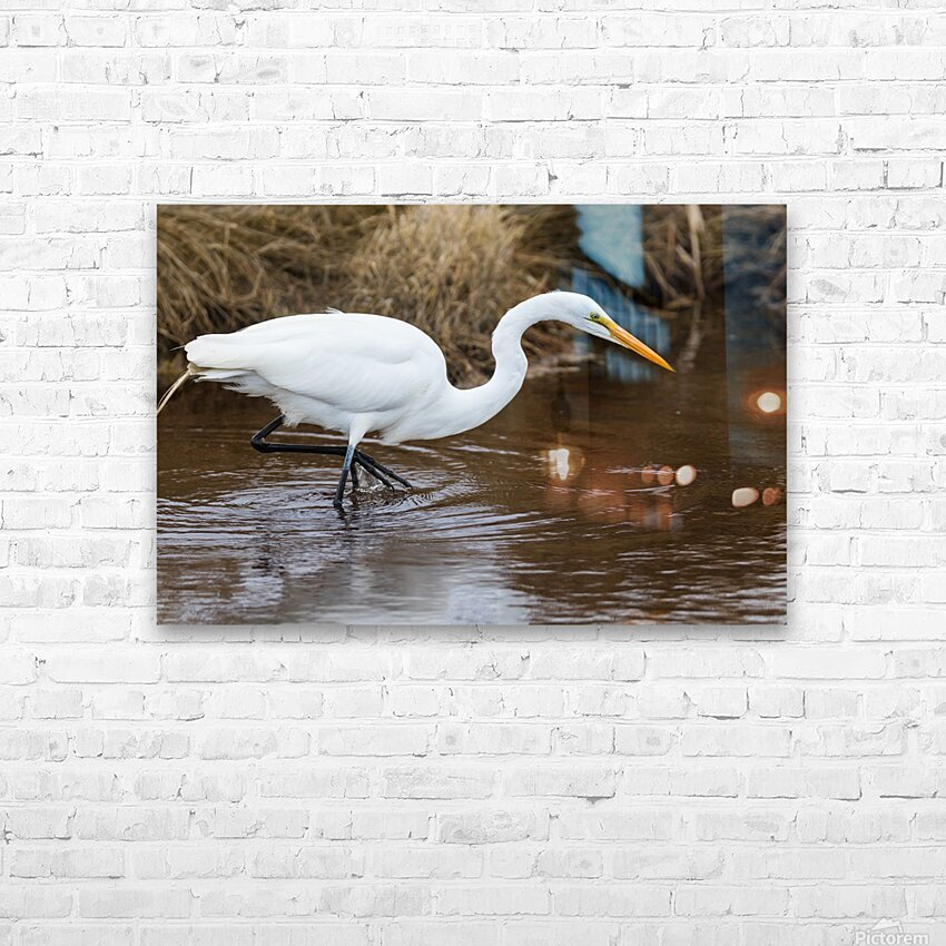 Great White Egret ap 2802 HD sublimation métal imprimé avec décoration flotteur cadre (boîte)