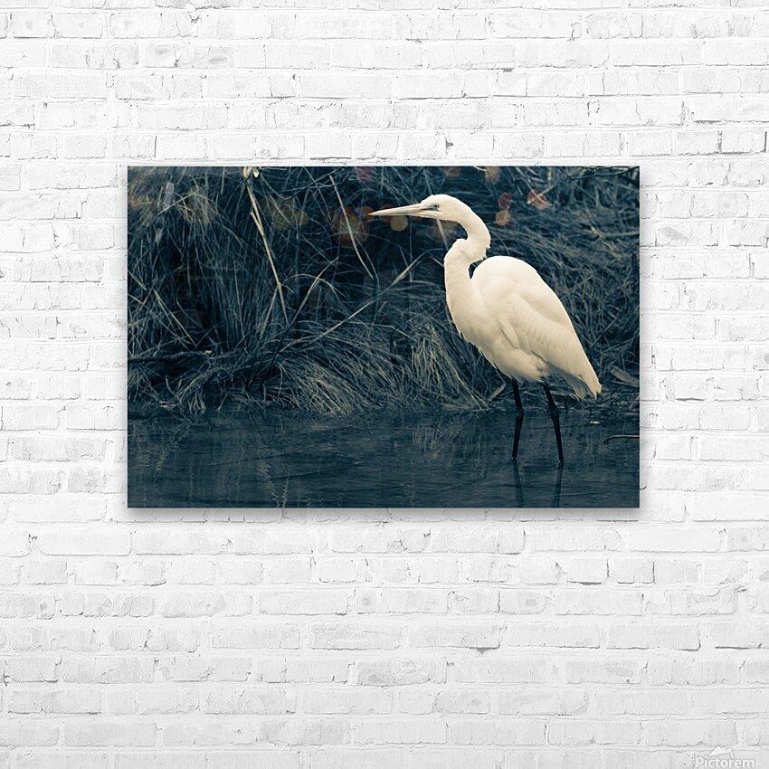 Great White Egret ap 1839 B&W HD sublimation métal imprimé avec décoration flotteur cadre (boîte)