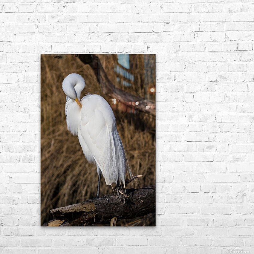 Great White Egret ap 2767 HD Sublimation Metal print with Decorating Float Frame (BOX)
