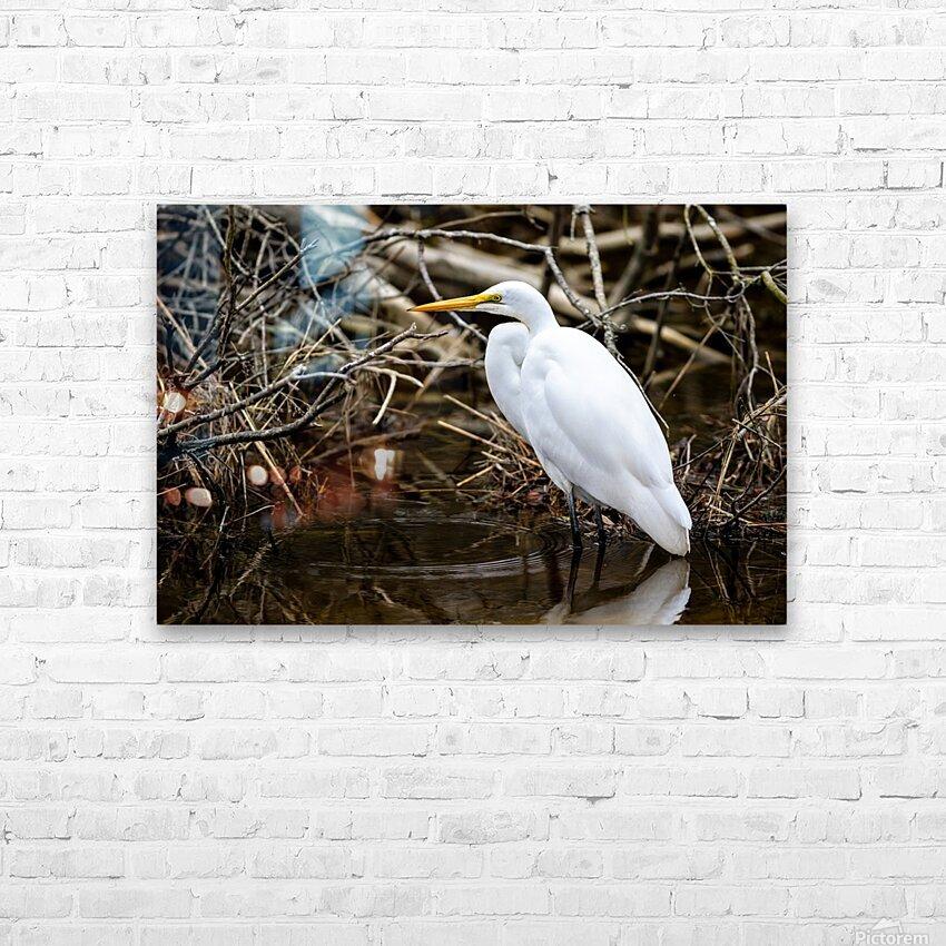 Great White Egret ap 2807 HD sublimation métal imprimé avec décoration flotteur cadre (boîte)