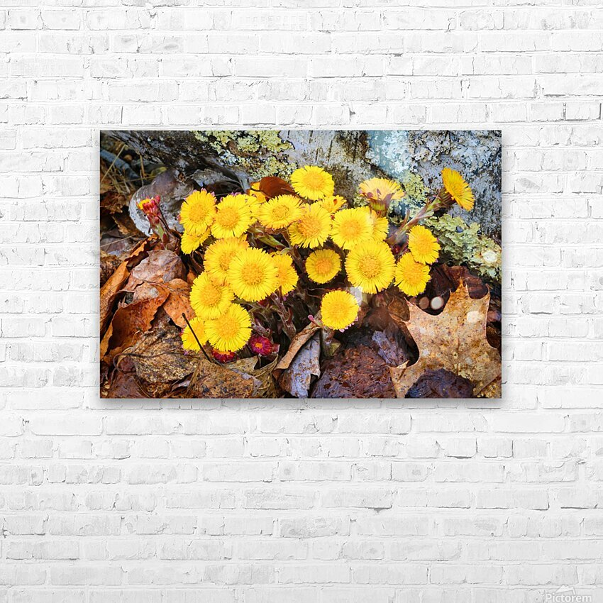 Flowers ap 2222 HD Sublimation Metal print with Decorating Float Frame (BOX)