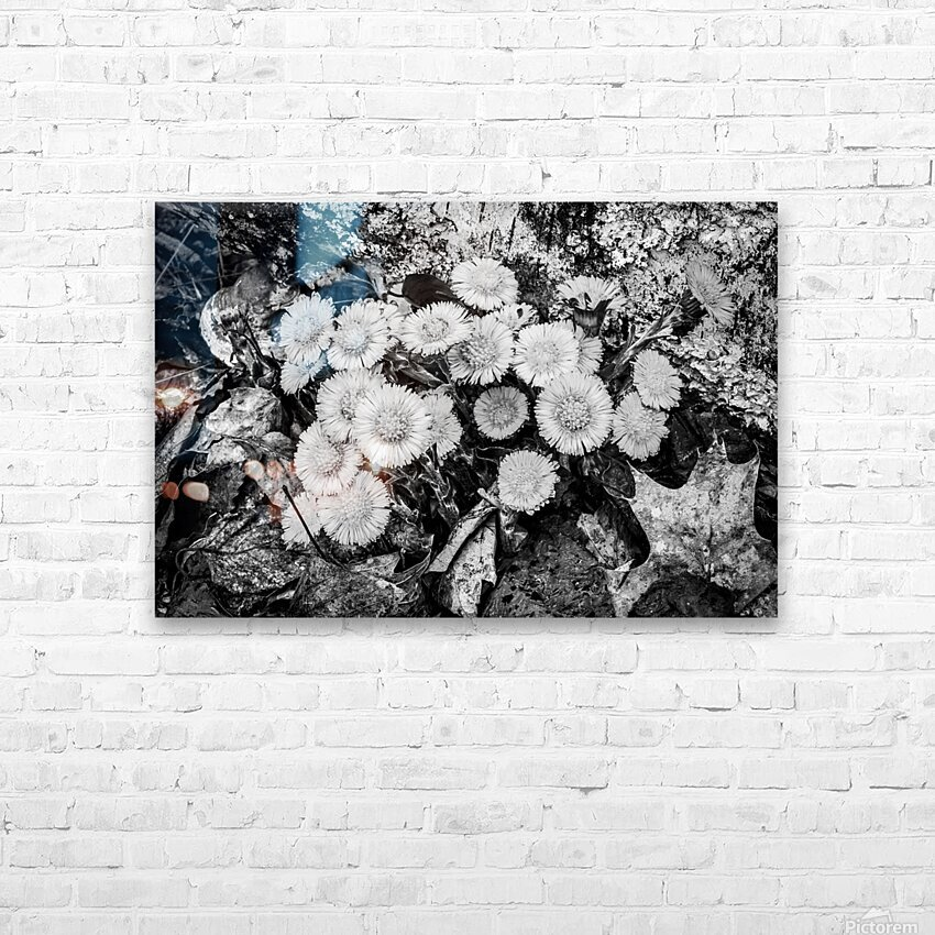 Flowers ap 2222 B&W HD Sublimation Metal print with Decorating Float Frame (BOX)