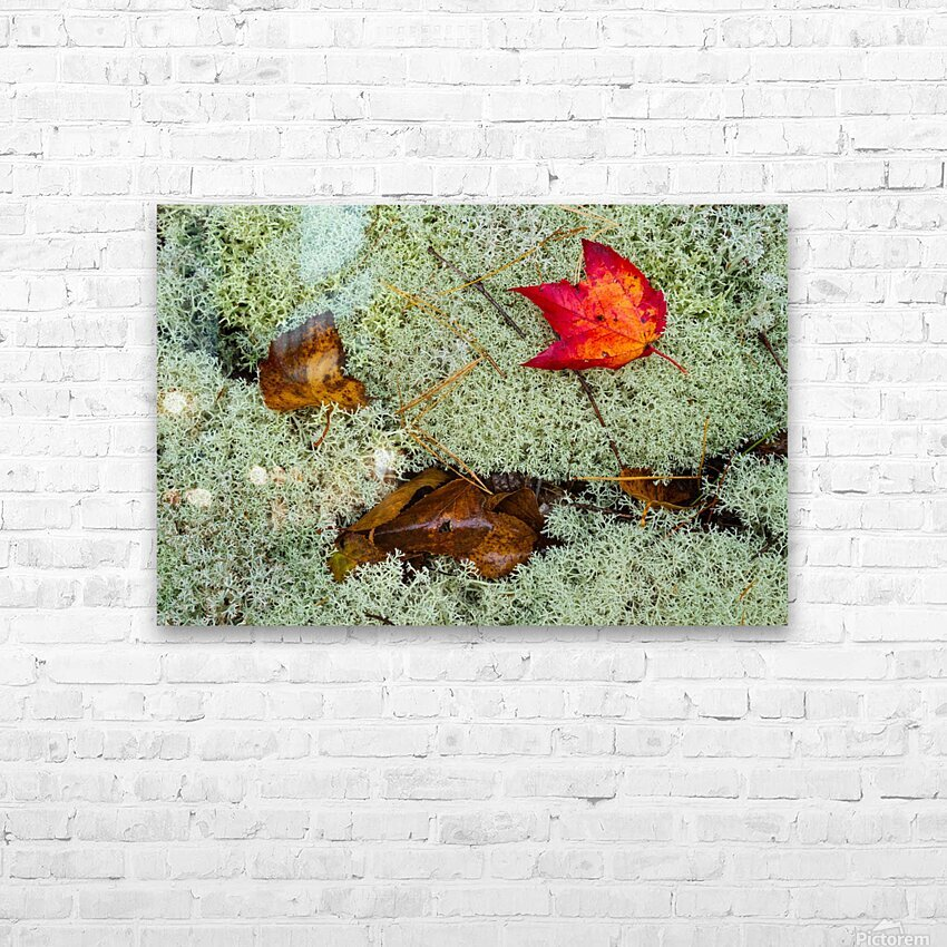 Leaves  N  Lichen ap 1553 HD Sublimation Metal print with Decorating Float Frame (BOX)