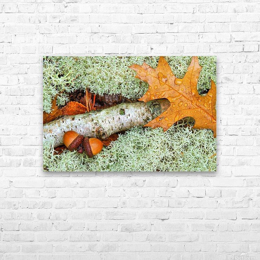 Pin Oak Leaf ap 1557 HD Sublimation Metal print with Decorating Float Frame (BOX)