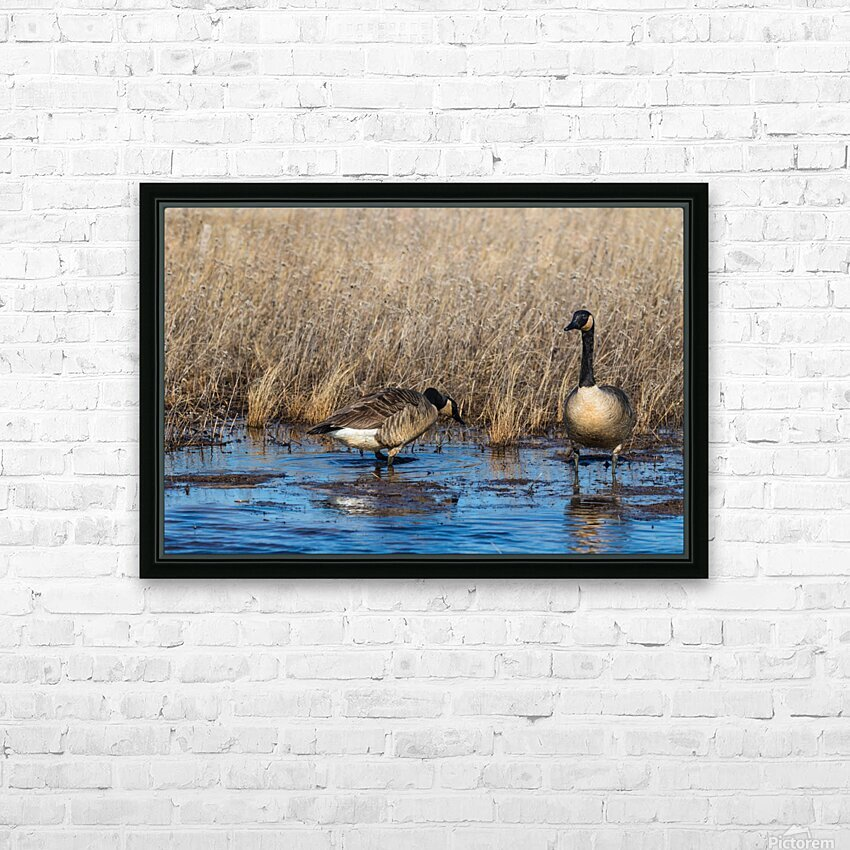 Canada Geese ap 2779 HD Sublimation Metal print with Decorating Float Frame (BOX)
