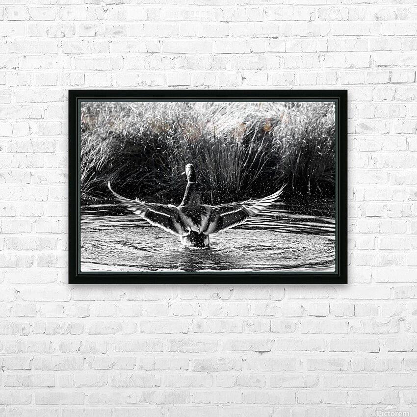 Mallard ap 1826 B&W HD Sublimation Metal print with Decorating Float Frame (BOX)