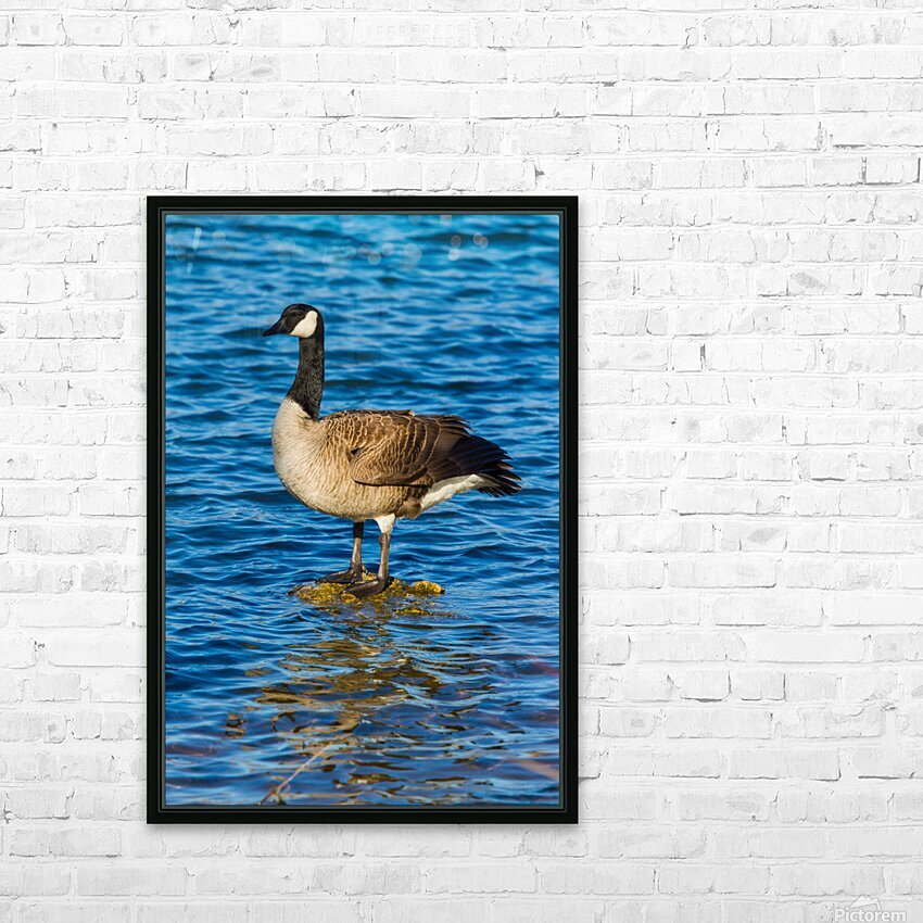 Canada Goose ap 1596 HD Sublimation Metal print with Decorating Float Frame (BOX)