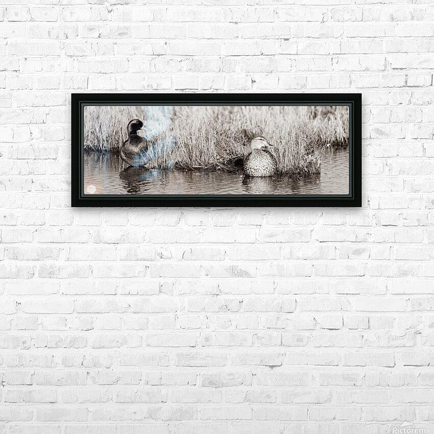 Mallard Pair ap 1775 B&W HD Sublimation Metal print with Decorating Float Frame (BOX)