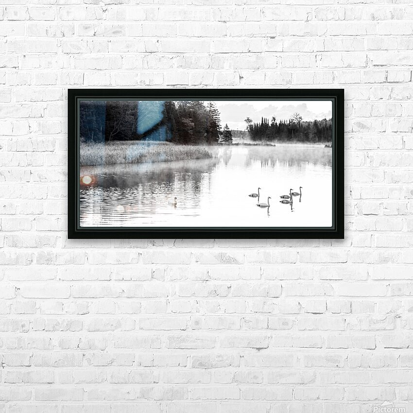 Swan Family ap 2694 B&W HD Sublimation Metal print with Decorating Float Frame (BOX)