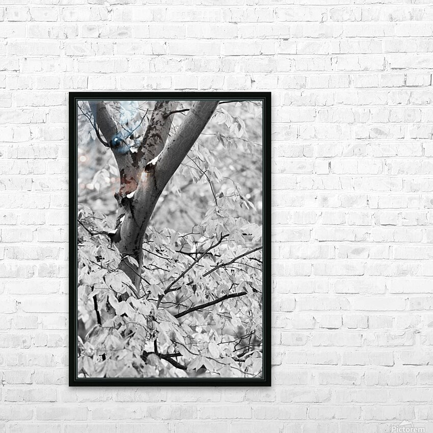 Beech Tree ap 1586 B&W HD Sublimation Metal print with Decorating Float Frame (BOX)