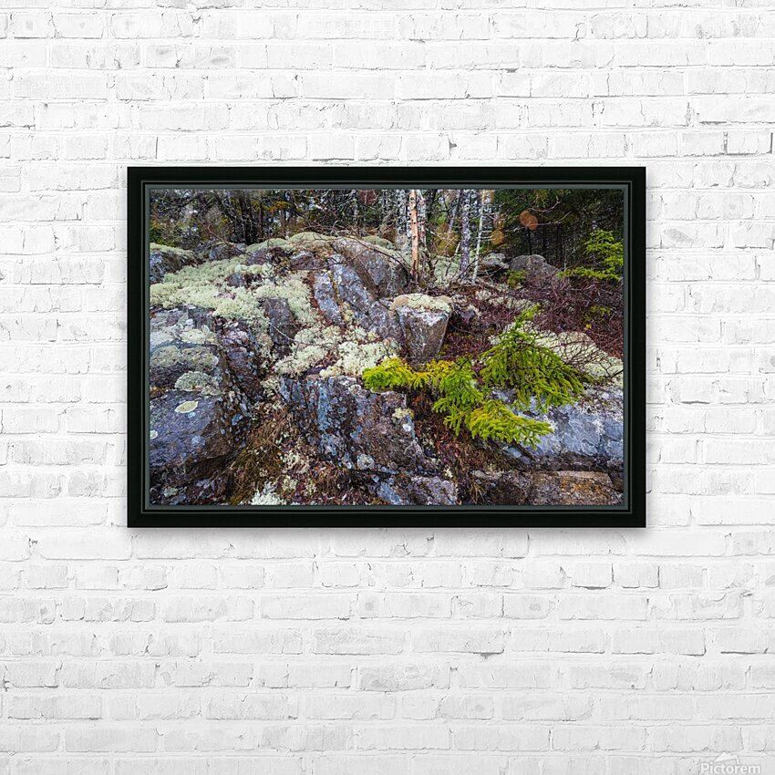 Moss   Lichen ap 2294 HD Sublimation Metal print with Decorating Float Frame (BOX)
