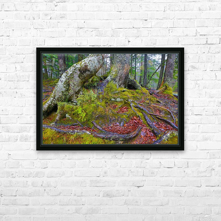 Moss   Lichen ap 2196 HD Sublimation Metal print with Decorating Float Frame (BOX)