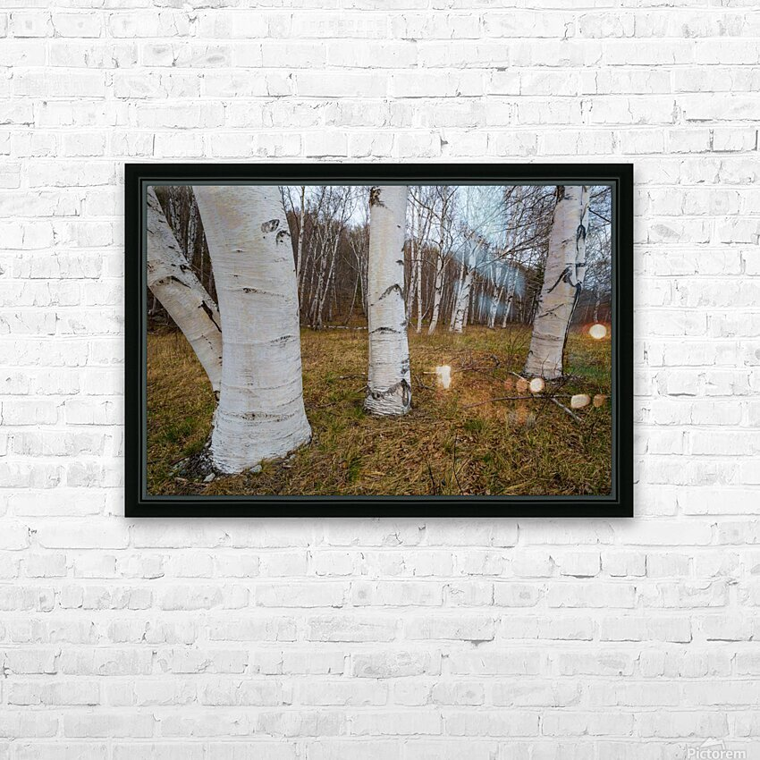 White Birch ap 2242 HD Sublimation Metal print with Decorating Float Frame (BOX)