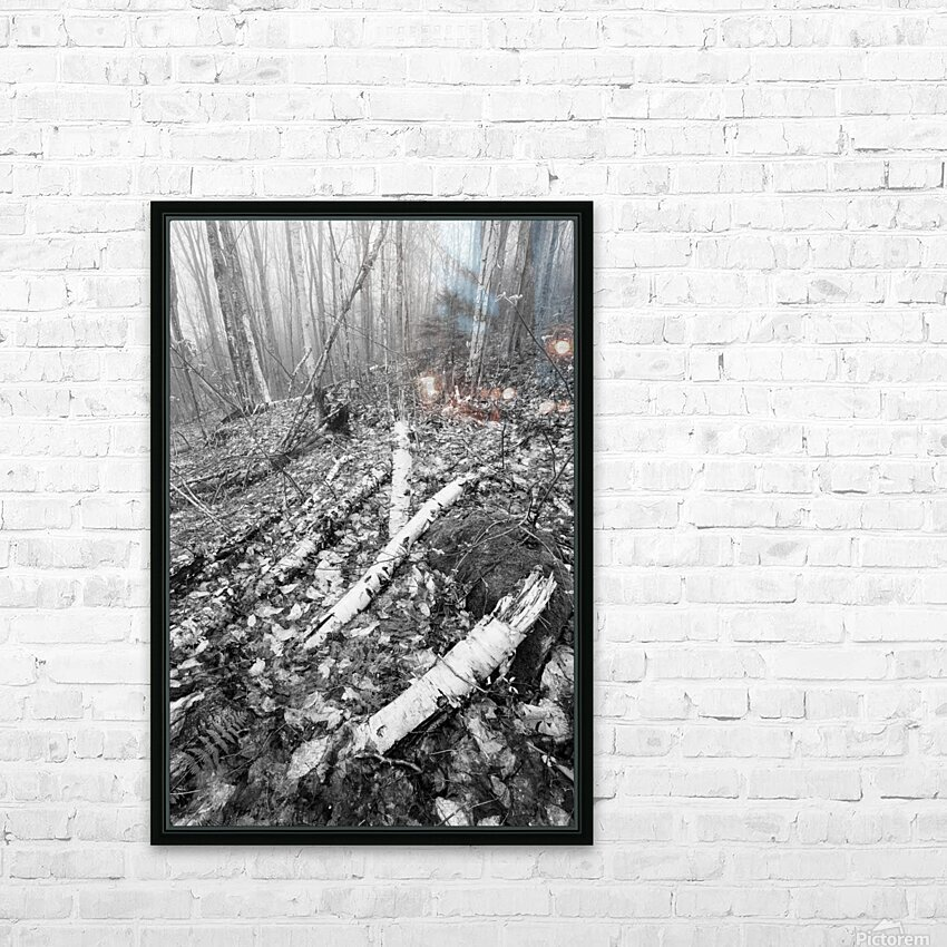 White Birch ap 2186 B&W HD Sublimation Metal print with Decorating Float Frame (BOX)