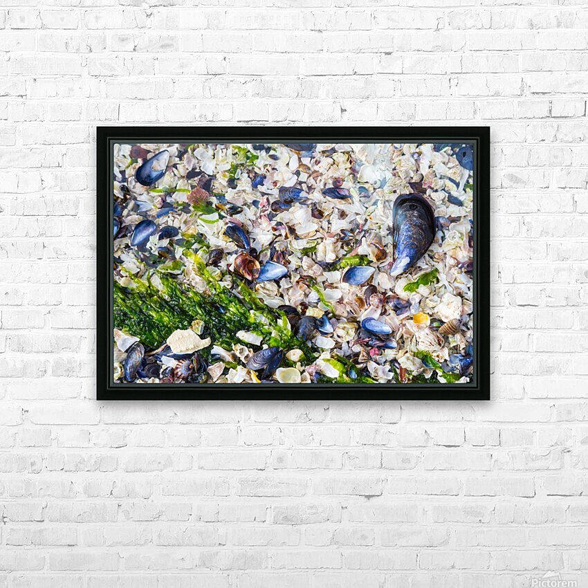Barnacle Shells ap 1528 HD Sublimation Metal print with Decorating Float Frame (BOX)