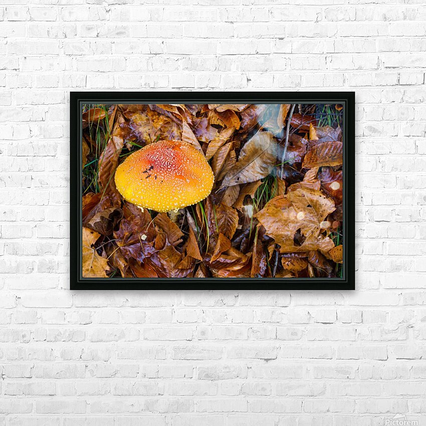 Mushroom ap 1579 HD Sublimation Metal print with Decorating Float Frame (BOX)