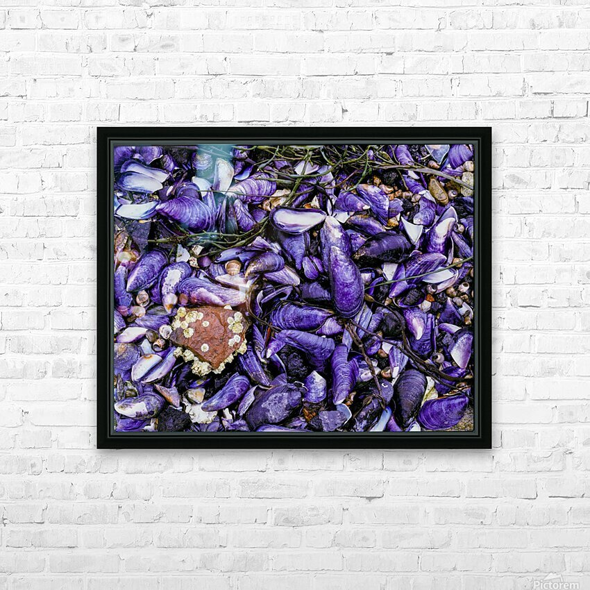 Shells ap 1519 HD Sublimation Metal print with Decorating Float Frame (BOX)