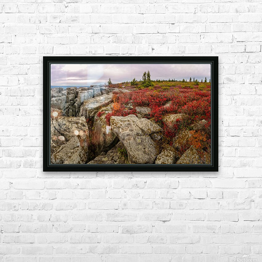 Bear Rocks Preserve apmi 1790 HD Sublimation Metal print with Decorating Float Frame (BOX)
