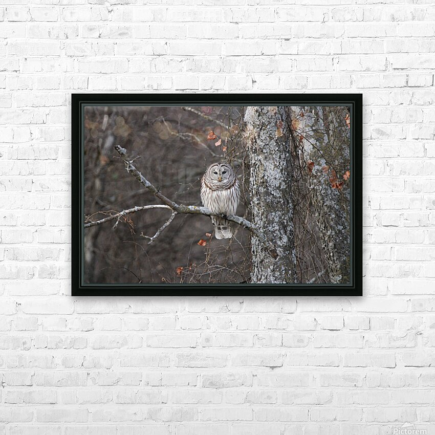Sleepy Owl HD Sublimation Metal print with Decorating Float Frame (BOX)